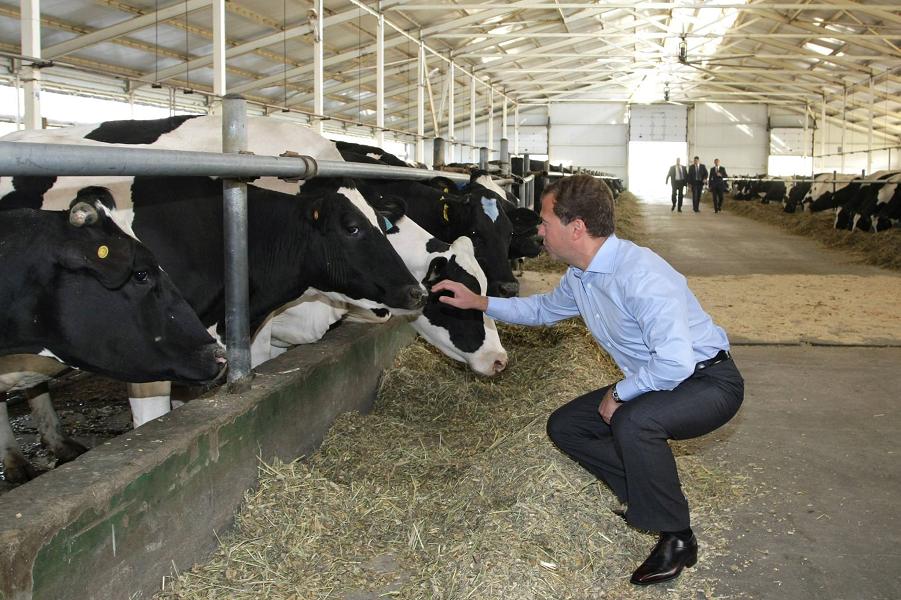 Медведев поддержал брянское сельское хозяйство
