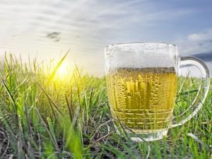 Пиво станет малодоступным и дорогим. Но не на Урале.