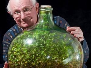 Англичанин полвека не поливал тропическое растение