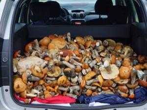 Моторное топливо из грибов создали химики МГУ
