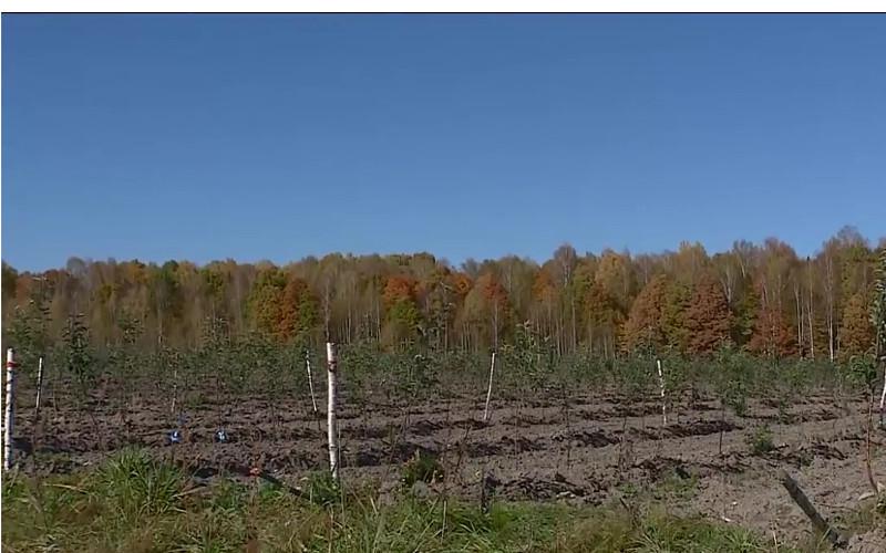 В Брянской области разбили крупный яблоневый сад