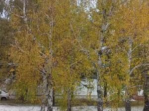 Дожди с мокрым снегом возвращаются в Челябинскую область