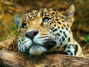 Человек уничтожил 60 процентов диких животных за последние 40 лет