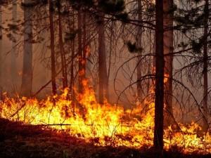 Огненная стихия угрожает поселку Южного Урала