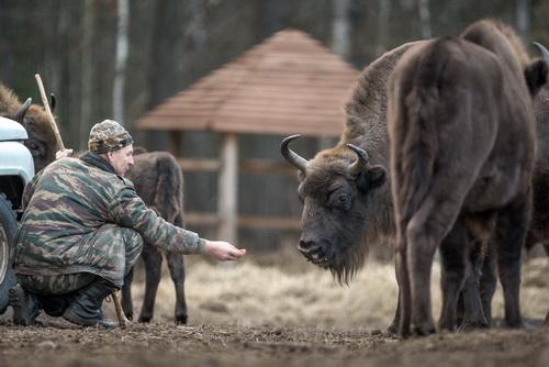 В Брянском заповеднике наступил сезон подкормки зверей