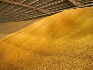 19 тысяч тонн зерна украли из Госфонда России