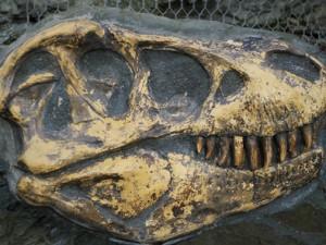Археологи нашли останки 12-метрового неизвестного науке динозавра