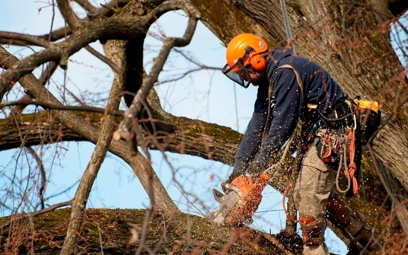 Мэр Брянска велел спилить аварийные деревья по переулку Трудовому