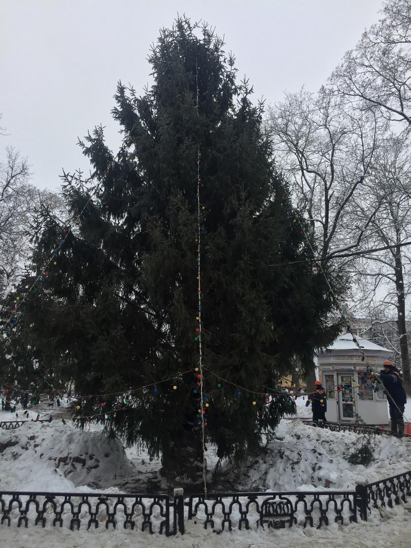 Главную елку Брянска начали украшать