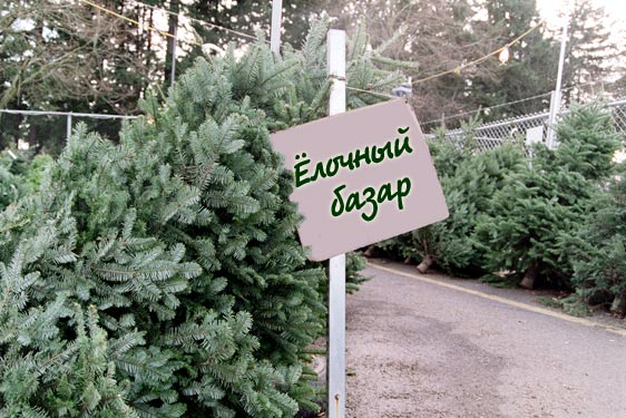 Елочные базары в Брянске начнут свою работу с 20 декабря