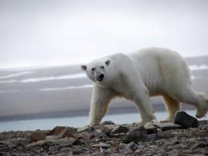 В Арктике Россия обогнала американцев. Осталось догнать их по уровню жизни