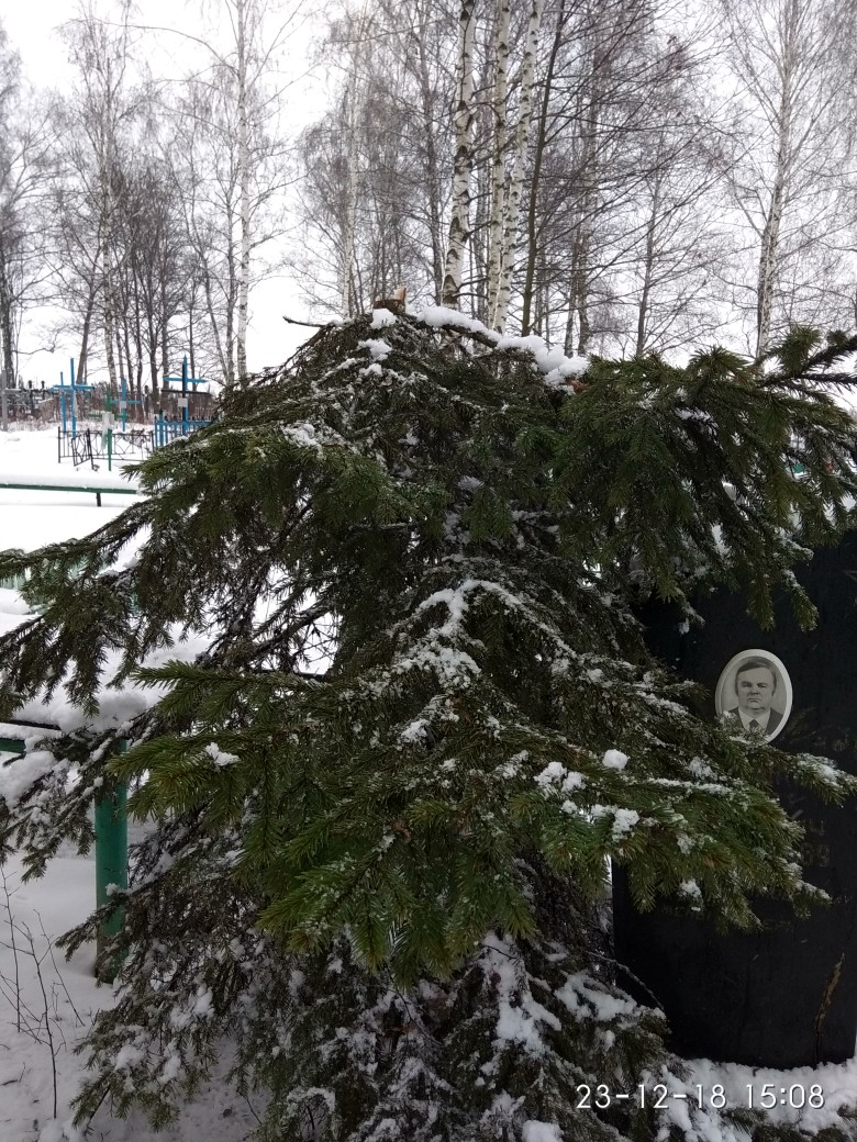 В Новозыбковском районе на кладбище малолетние хулиганы спилили ель