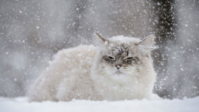 Завтра в Брянске будет теплее