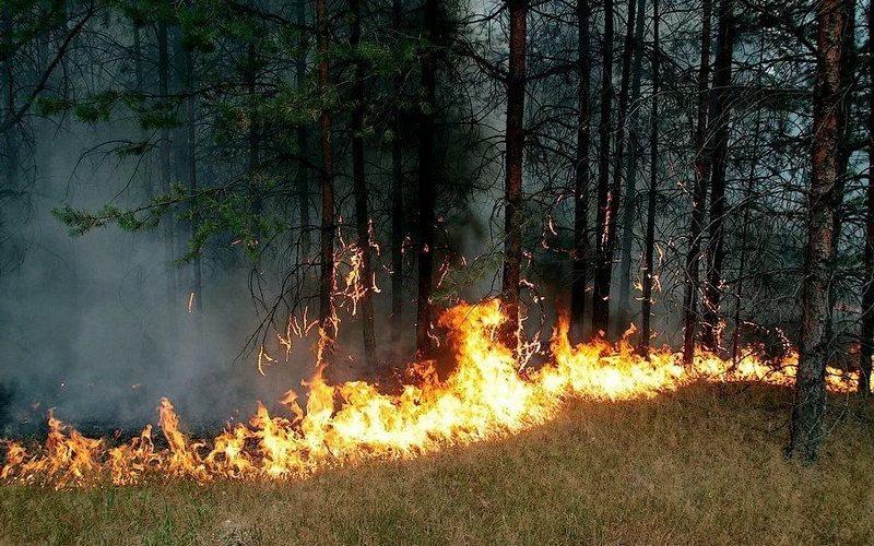 На охрану брянских лесов от пожаров потратят 80 миллионов рублей