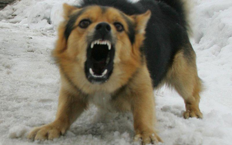 На улице Горбатова в Брянске собака едва не загрызла женщину
