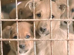 Волонтеры просят городскую власть дать шанс на жизнь бездомным кошкам и собакам