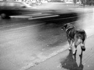 Жительница Кыштыма спасла от беспризорного пса маленького мальчика