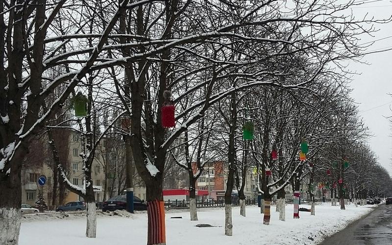 Деревья в Фокинском районе Брянска нарядили в радужные шарфы