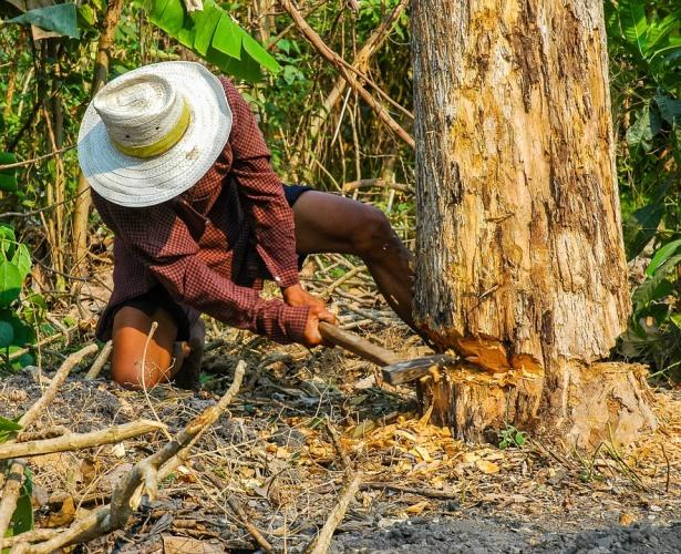 В Почепском районе незаконно срубили деревья на 5 миллионов рублей