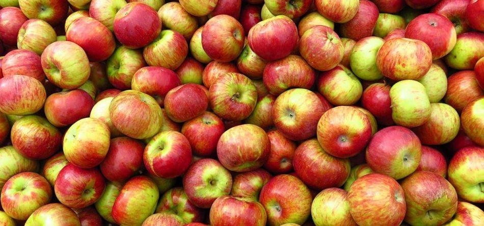 25 тонн подозрительных яблок не попадет на новогодние столы жителей Брянска