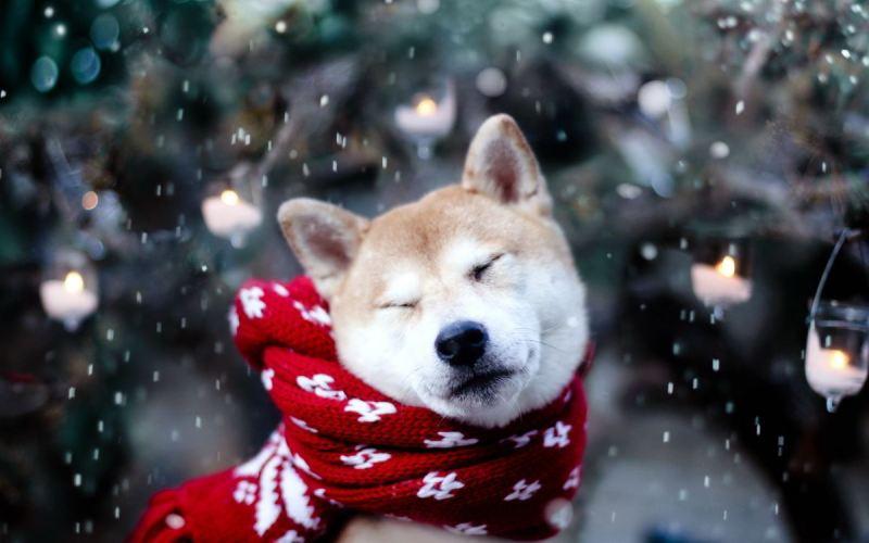 В четверг брянцев ждет небольшой снег