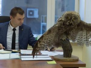Советник министра экологии Челябинской области объяснил, откуда у него чучело совы