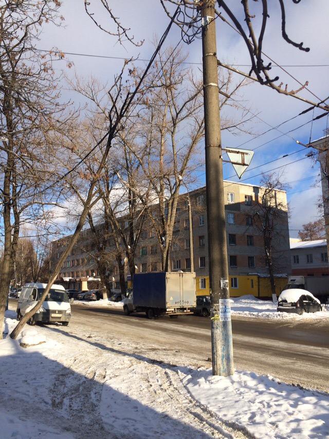 Жителям Бежицы угрожает дерево