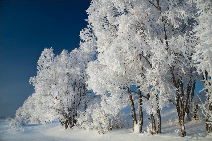 Завтра в Брянске снежно и ветрено