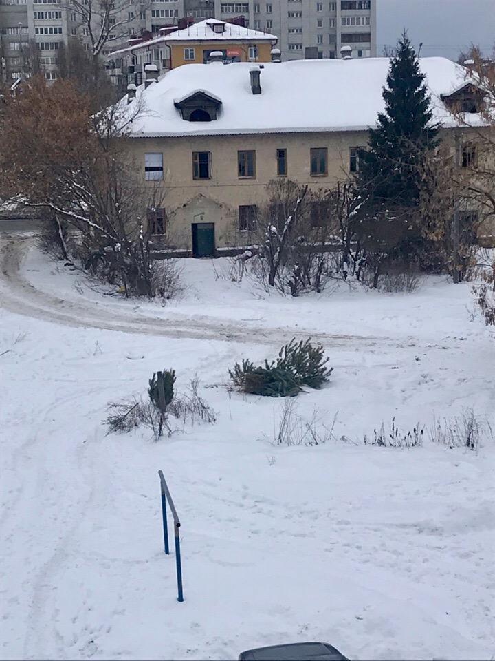 Жители Брянска массово выкидывают новогодние елки