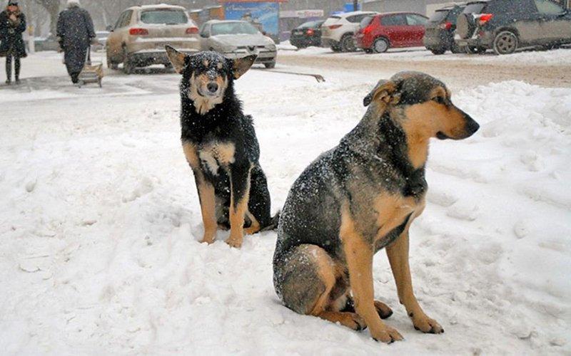 Белобережские волонтеры взялись за бродячих собак