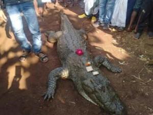 500 индийцев провожали в последний путь самого доброго крокодила-долгожителя