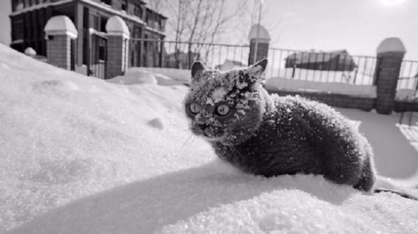 В Брянскую область нагрянут морозы до -20