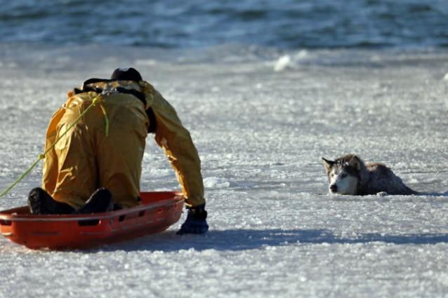 Брянские спасатели не бросили животное погибать