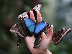 Массовое вымирание насекомых началось на планете