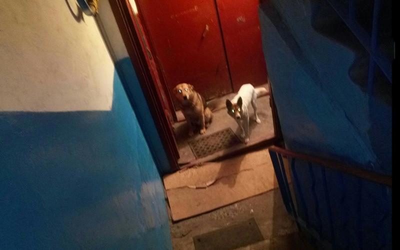 Брянцев поссорили собаки, поселившиеся в подъезде