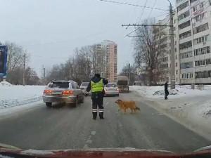 Челябинский инспектор ДПС помог хромой дворняге перейти дорогу