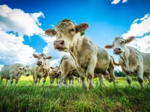 Спасти планету может только отказ от мяса, уверены экологи