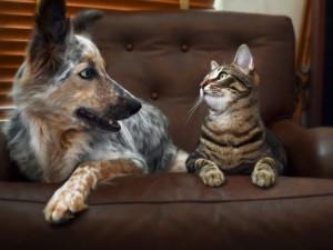 Медики назвали 5 животных, способных лечить людей