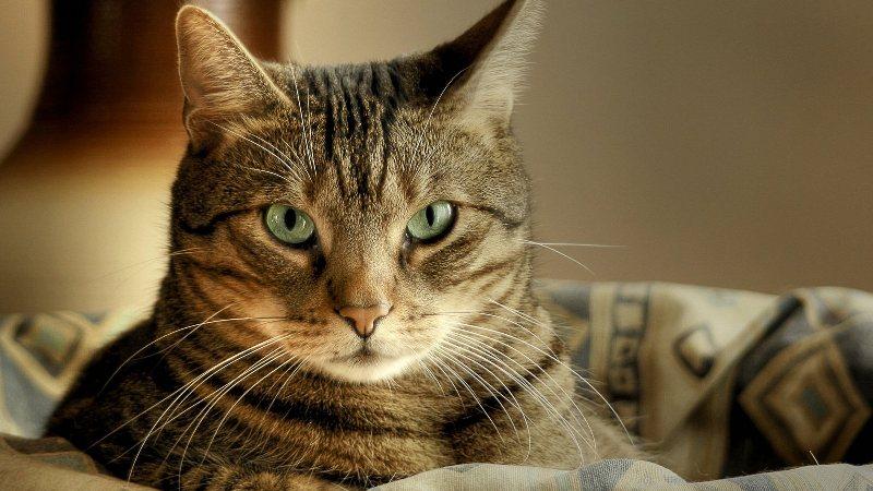 Кошки могут привести своих хозяев к шизофрении
