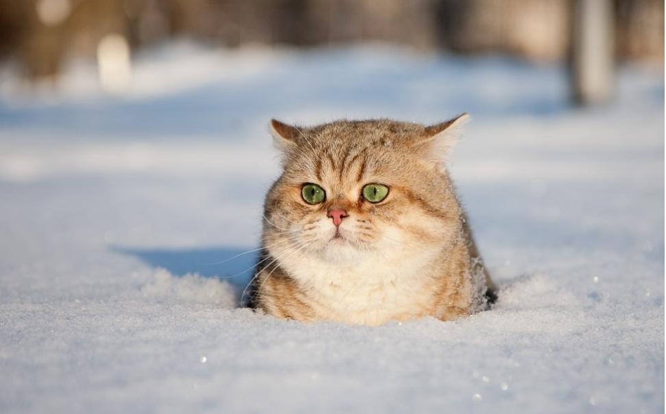 Завтра в Брянске снег и потепление
