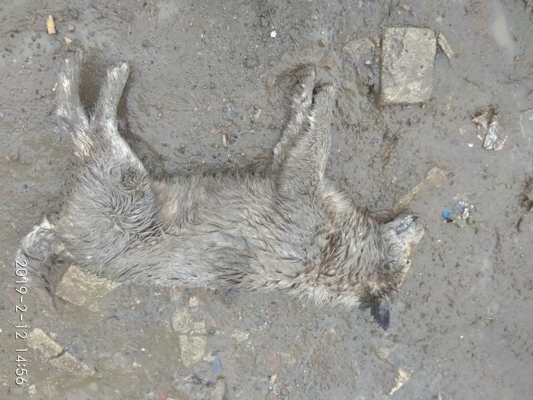 В Белых Берегах дети травили собак