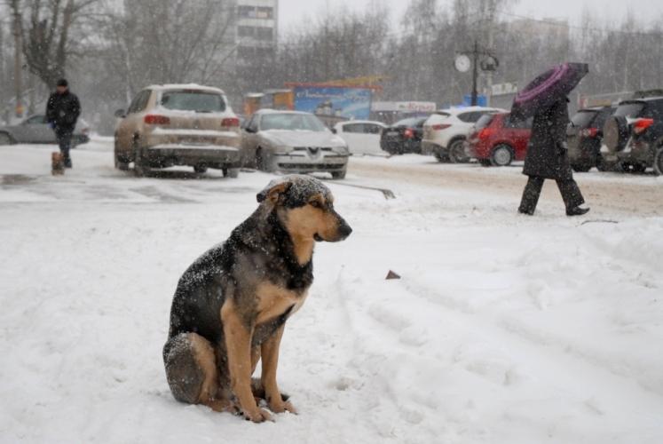 Бессердечные брянцы пытались выгнать из автобуса замерзшую собаку