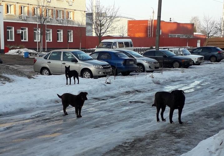 Агрессивные собаки держат в страхе жителей Фокинского района