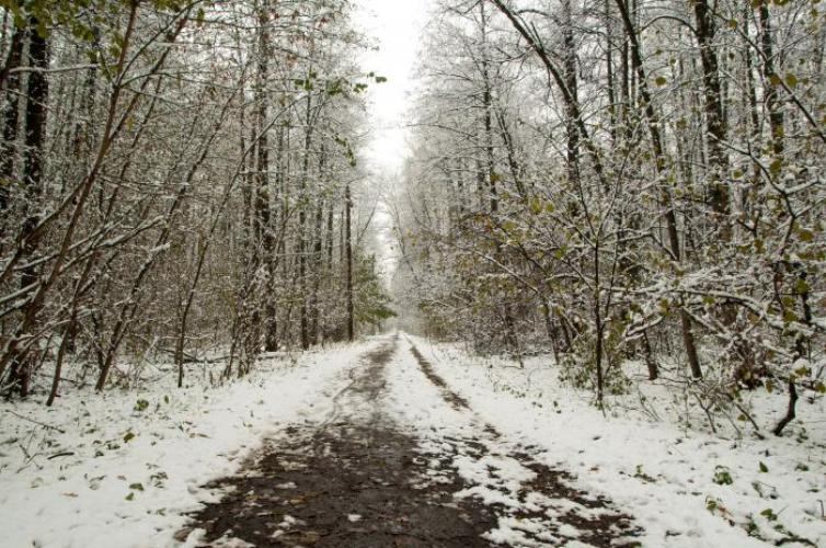 Брянцы просят благоустроить лесопарковую зону «Заставище»