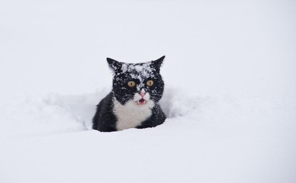 Завтра в Брянске очень холодная ночь