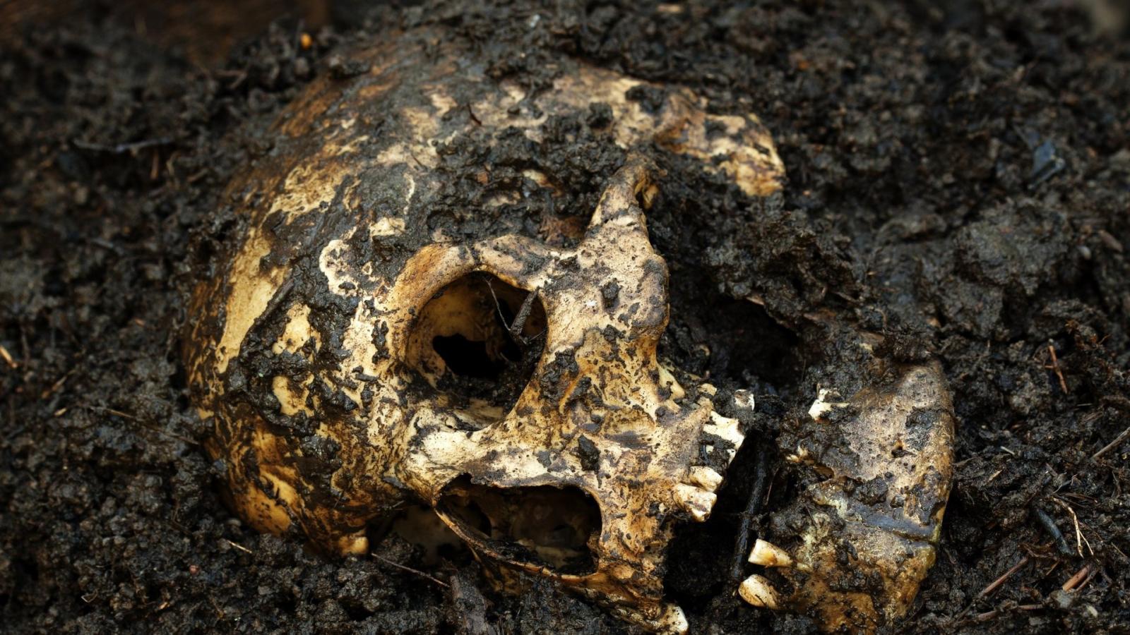 В московском театре нашли человеческий череп