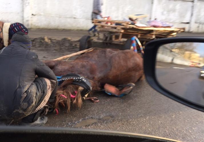 В Володарском районе Брянска иномарка сбила цыганскую лошадь