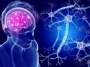 Нервные клетки восстанавливаются. Даже в 80 лет.
