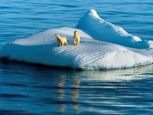 Через 20 лет Северный океан перестанет быть Ледовитым