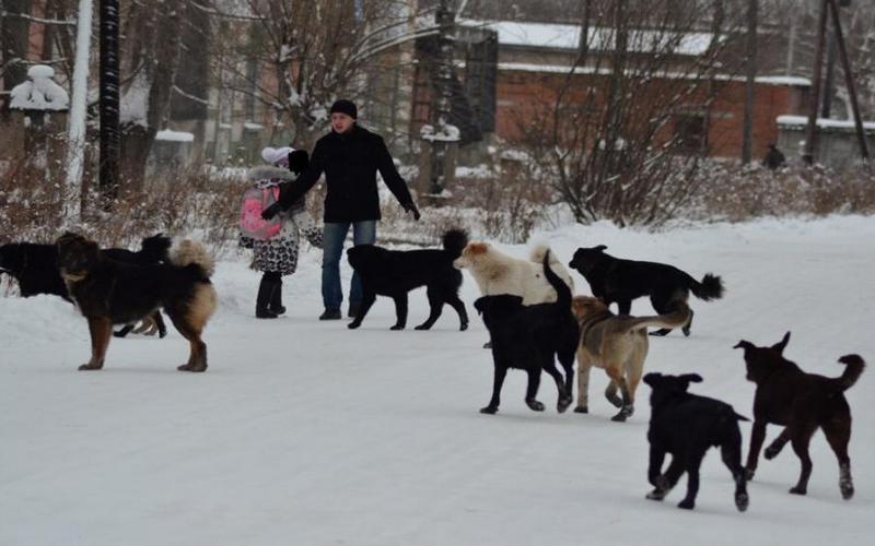 В Брянске стаи бездомных собак захватили район «Мясокомбината»